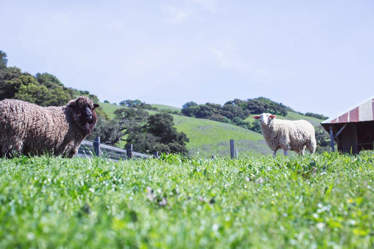 Farm to Bedroom