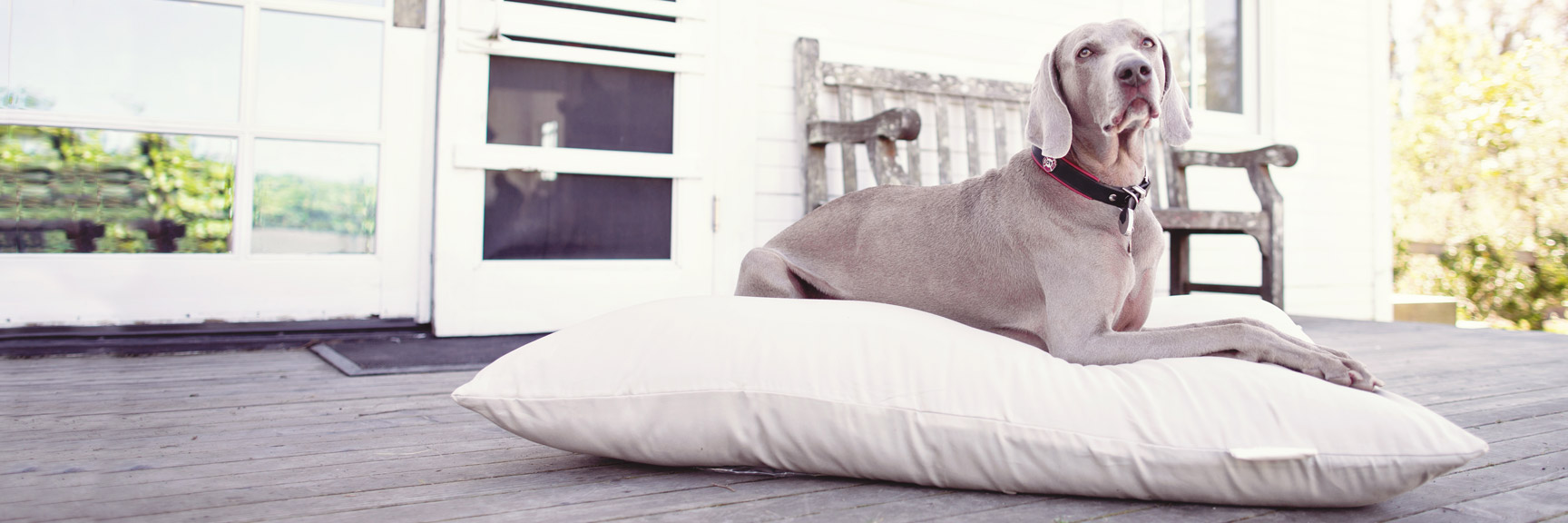 Organic Cotton Dog Beds