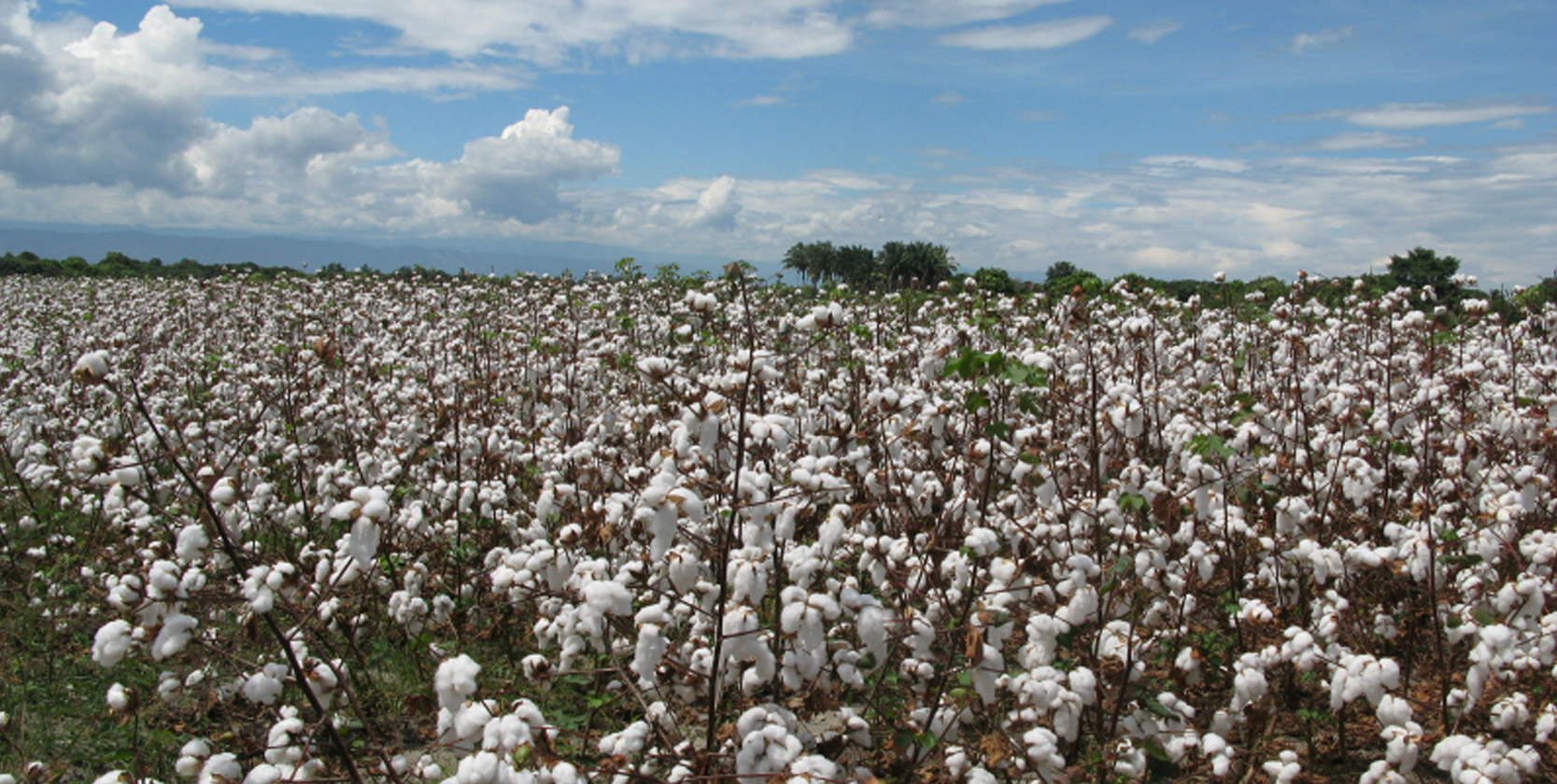 Why is Organic Cotton Important?