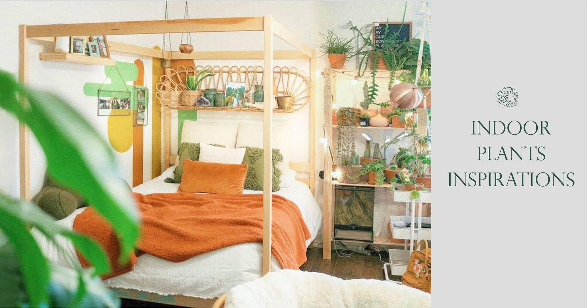 Indoor Plants Inspirations