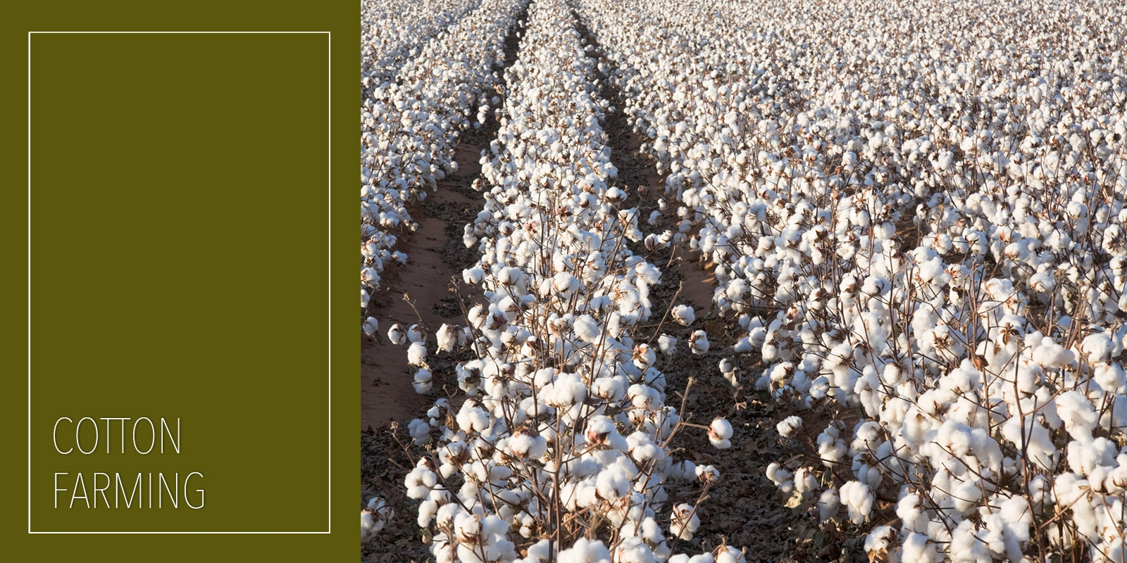 Negative Effects of Cotton Farming