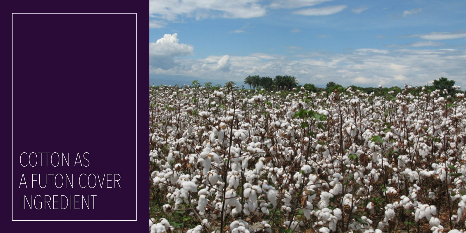 Why Is Organic Cotton Important