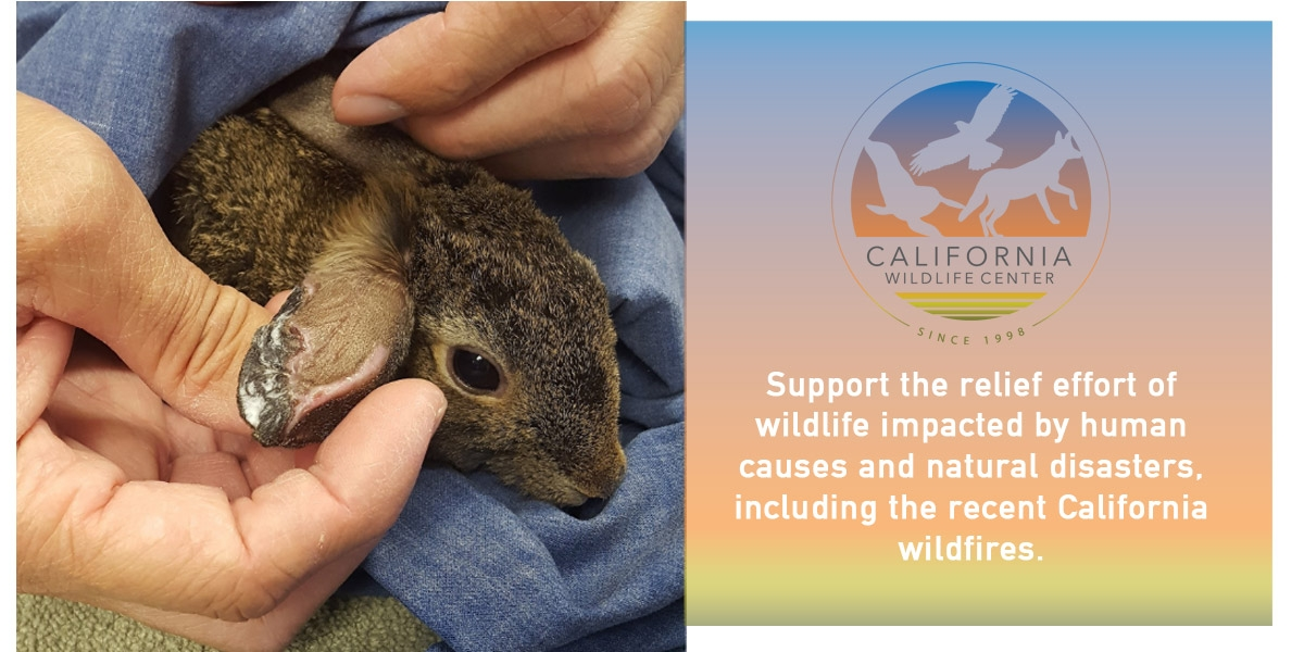 The Futon Shop Gives Back To California Wildlife Center