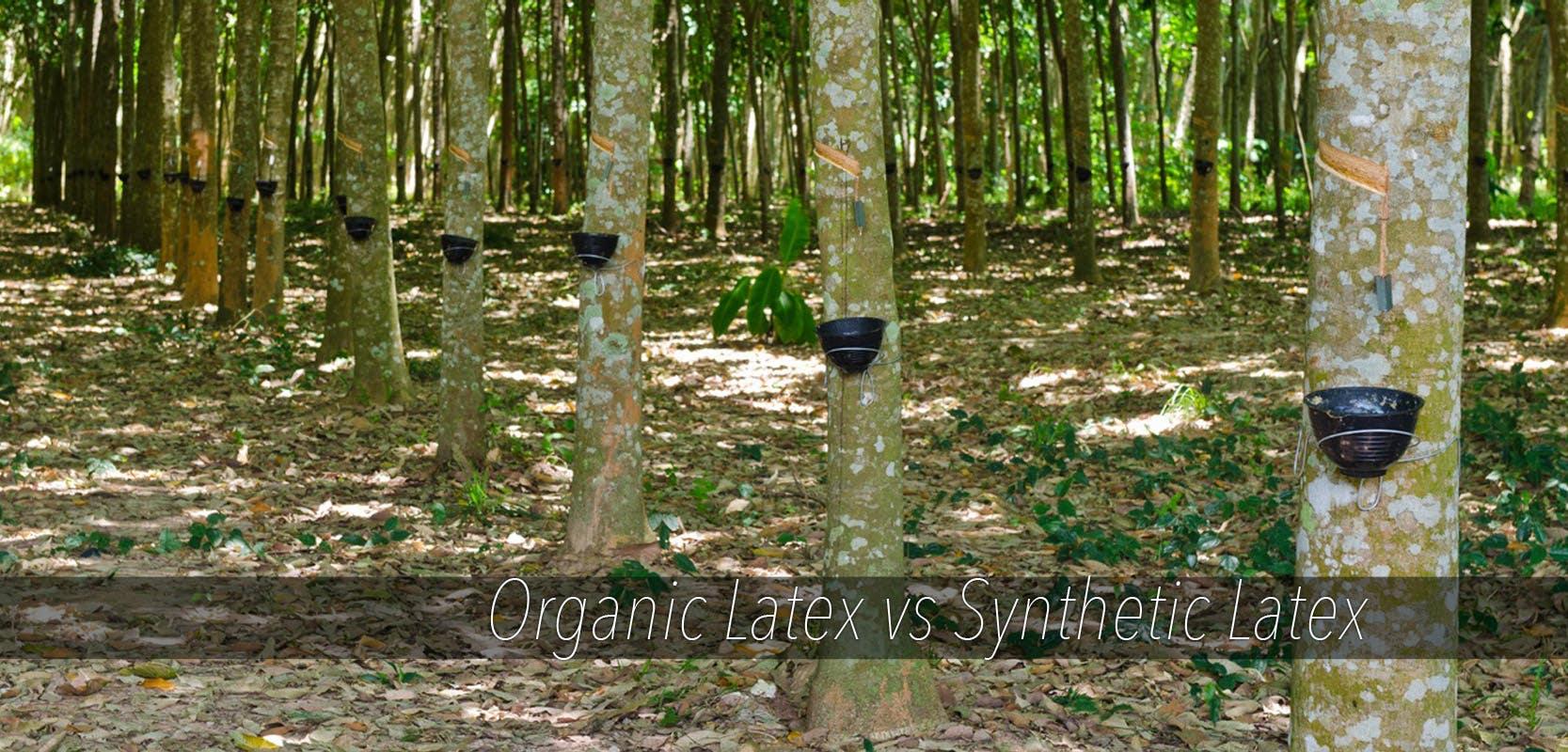 Organic Latex Verses Natural and Synthetic Latex