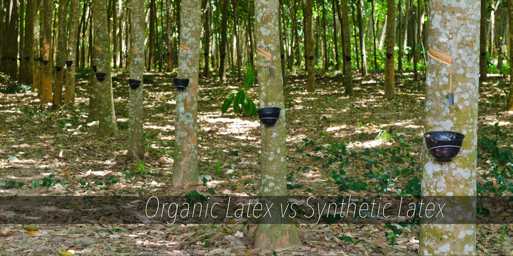 Organic Latex vs Natural Latex and Synthetic Latex