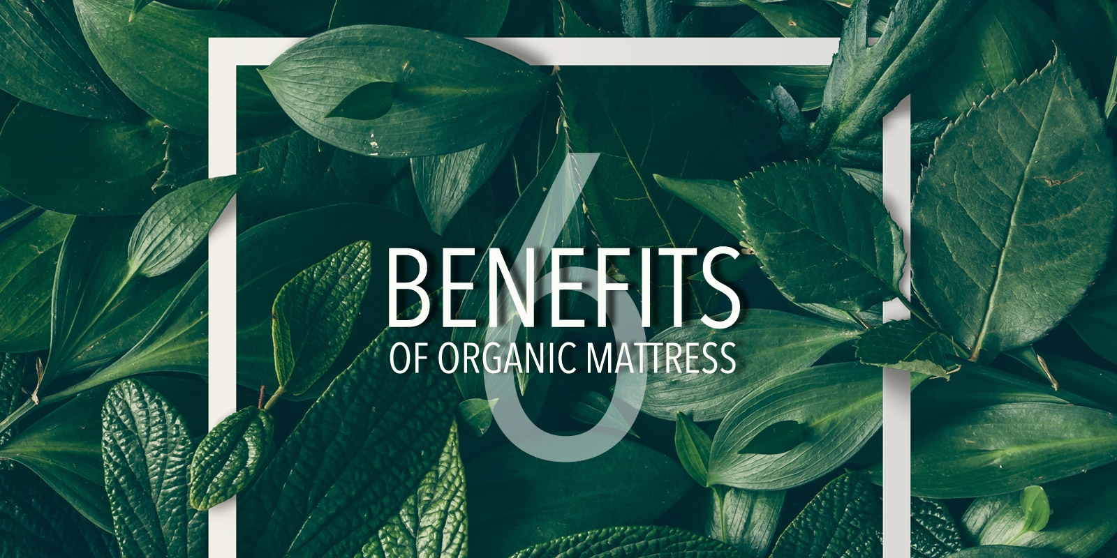 Why Buy An Organic Mattress