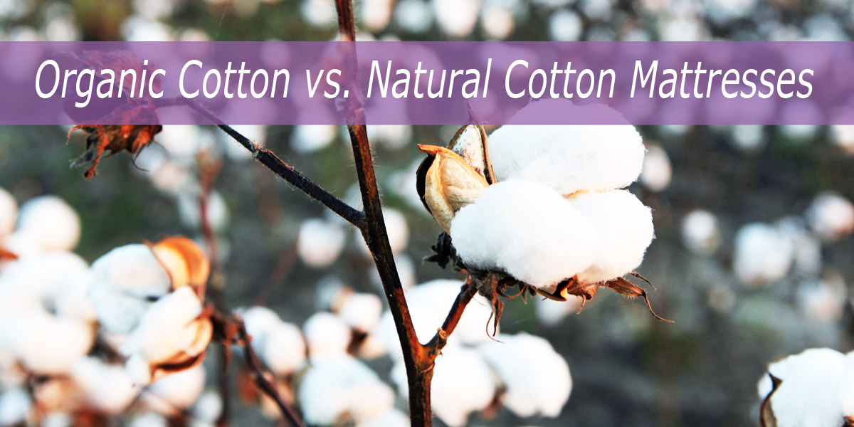 Organic Cotton Verses Natural Cotton Mattresses