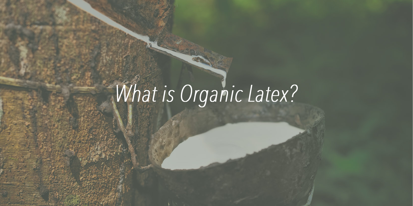 organic latex ingredient