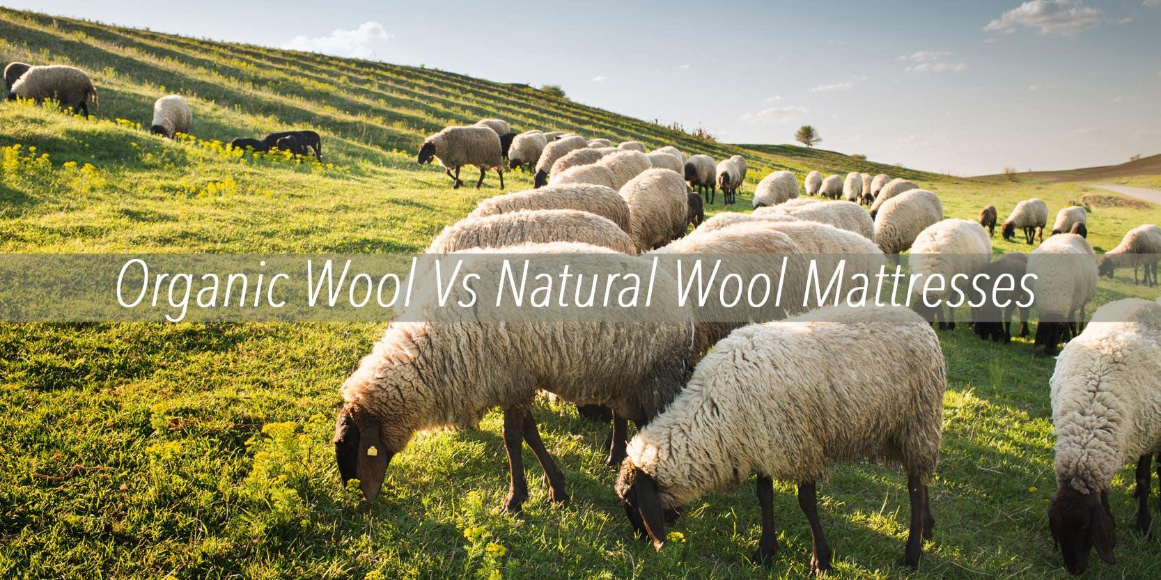 Organic Wool Verses Natural Wool Mattresses