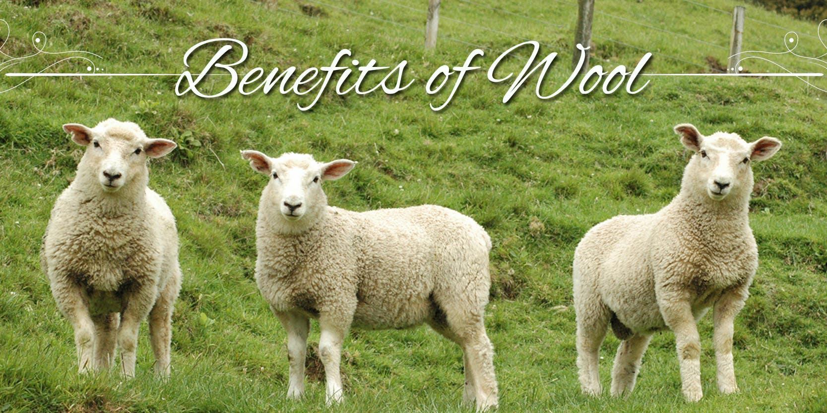 Why Sleep On Wool