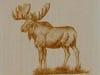 moose insert